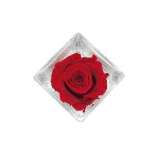 Cubo in vetro con rosa stabilizzata rossa profumata Parodia