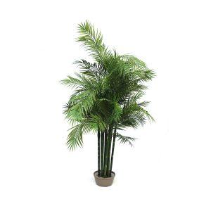 L'Areca Palm artificiale di Parodia