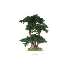 Il Bonsai Juniperus di Parodia