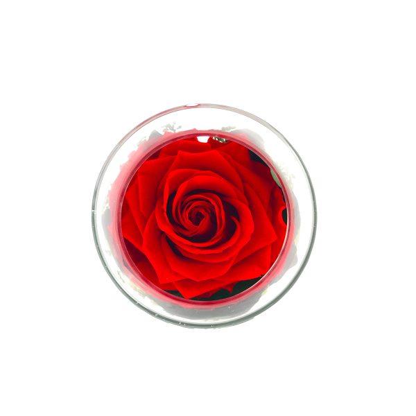 Un centrotavola in vetro con rosa stabilizzata rossa Parodia
