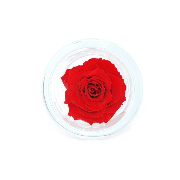 Cilindro in vetro con rosa stabilizzata rossa profumata Parodia