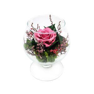 La Coppa cognac in vetro con rosa stabilizzata rosa Parodia