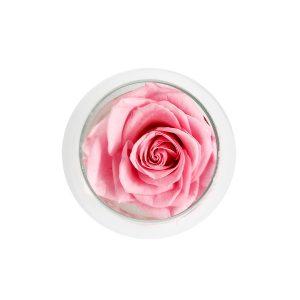 Una coppa cognac in vetro con rosa stabilizzata rosa Parodia