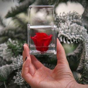 Cubo con rosa stabilizzata rossa Natale 2019 Quadrato