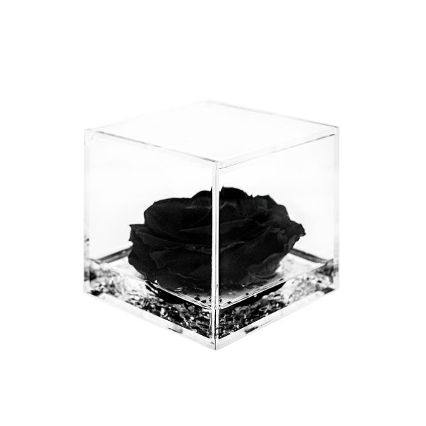 Cubo con rosa stabilizzata nera Parodia