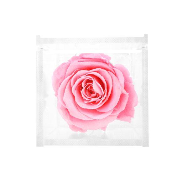 Cubo con rosa stabilizzata rosa Parodia