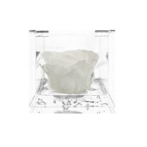 Cubo con rosa stabilizzata bianca Parodia
