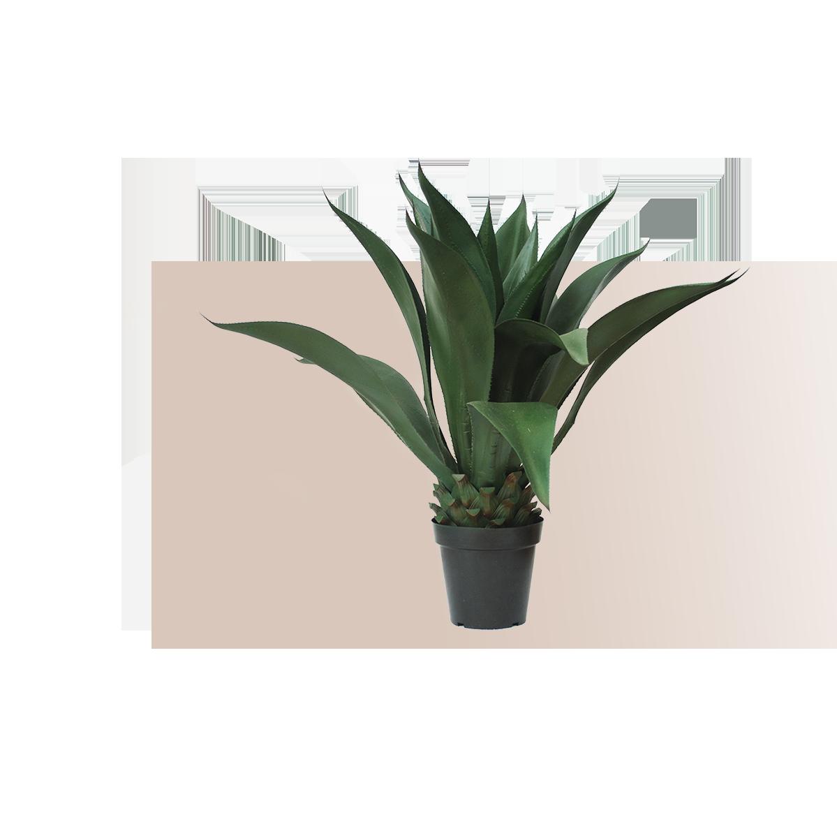 Le piante artificiali di Parodia