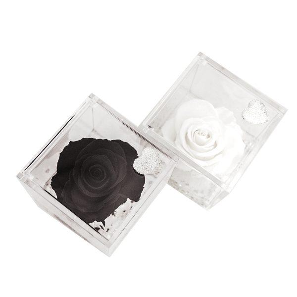 Le rose stabilizzate in edizione speciale Parodia