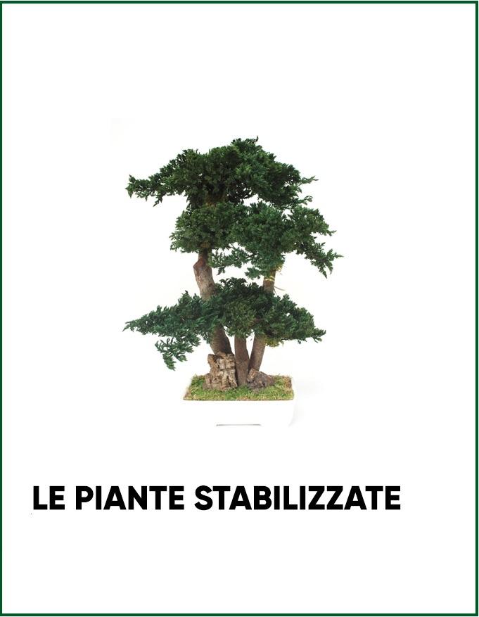 Le piante stabilizzate di Parodia
