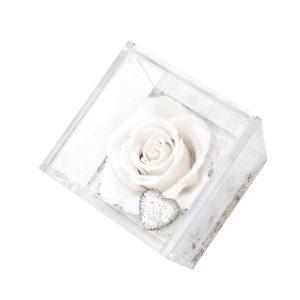 Un cubo trasparente con rosa bianca stabilizzata in edizione speciale Parodia