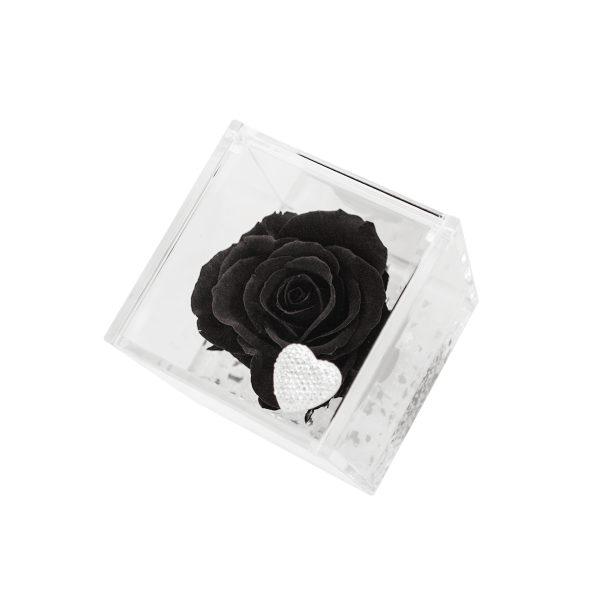 Un cubo trasparente con rosa nera stabilizzata in edizione speciale Parodia