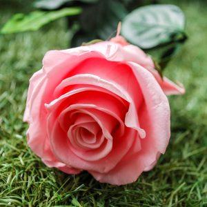 La rosa baccara stabilizzata a gambo lungo di Parodia