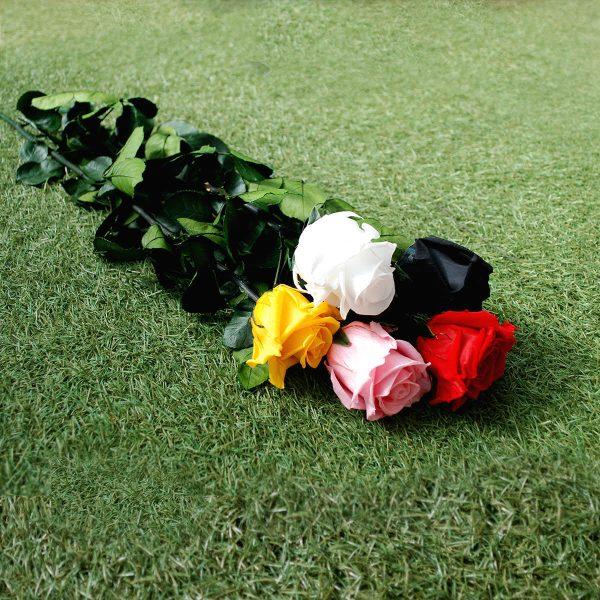Le rose baccara stabilizzate a gambo lungo Parodia