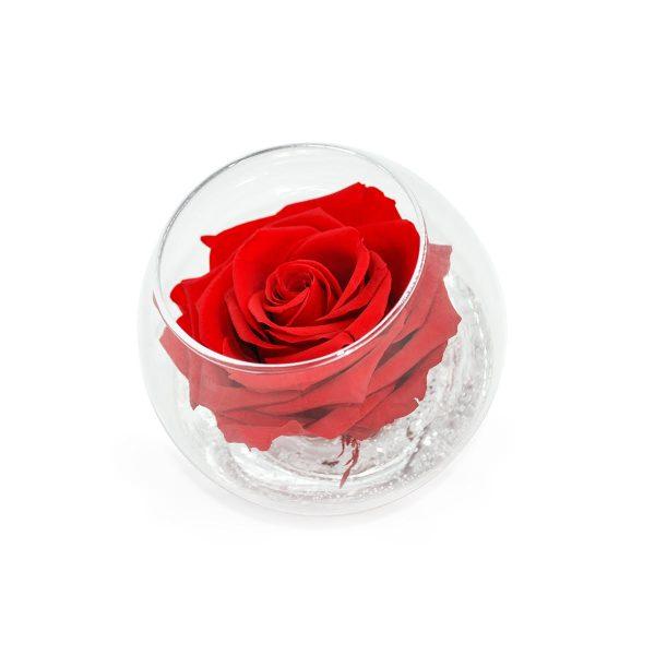 Sfera in vetro con rosa stabilizzata rossa profumata Parodia