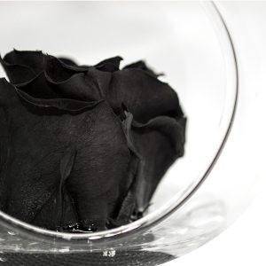 Sfera tagliata con gancio con rosa stabilizzata nera Parodia