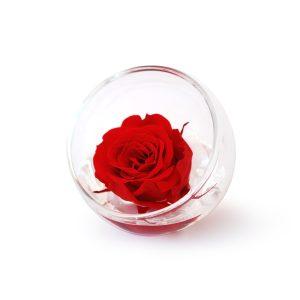 La Sfera tagliata in vetro con rosa stabilizzata rossa Parodia