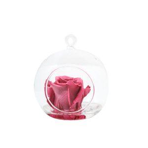 Sfera tagliata con gancio con rosa stabilizzata rosa Parodia