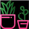 I vantaggi delle piante stabilizzate Parodia