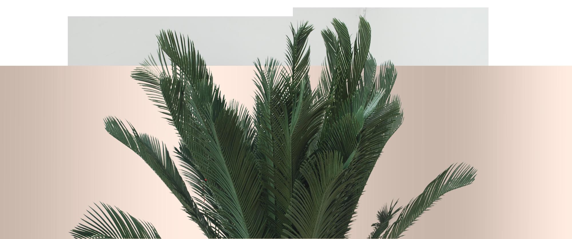 Le piante artificiali Parodia