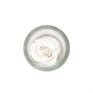 Cilindro in vetro con rosa stabilizzata bianca profumata Parodia