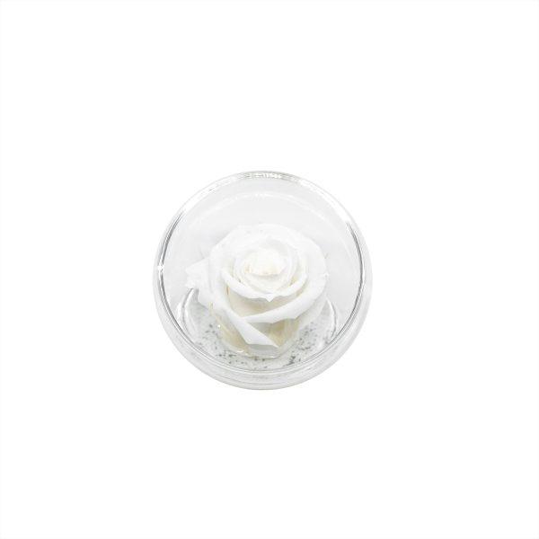 La piccola sfera tagliata con rosa stabilizzata bianca Parodia
