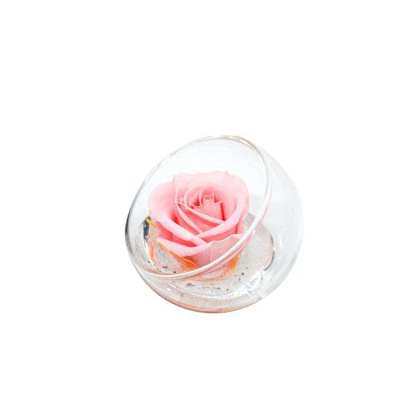 La Sfera tagliata con rosa stabilizzata rosa Parodia