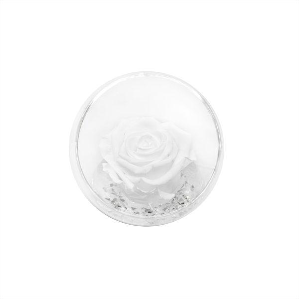 Una sfera tagliata con rosa stabilizzata bianca Parodia