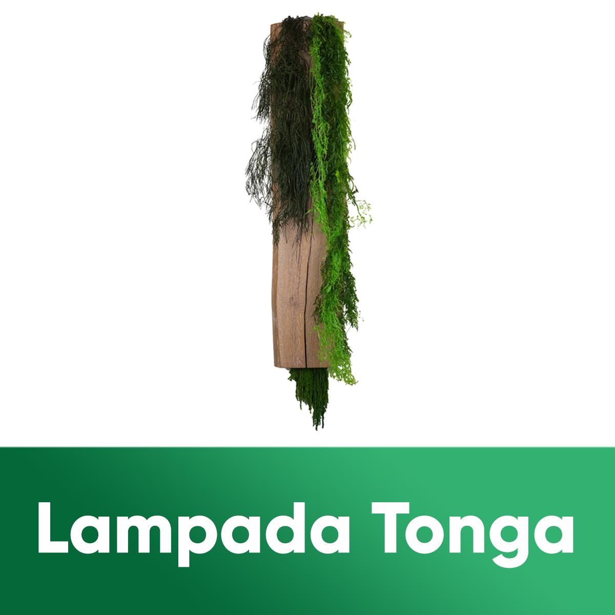 LAMPADA TONGA
