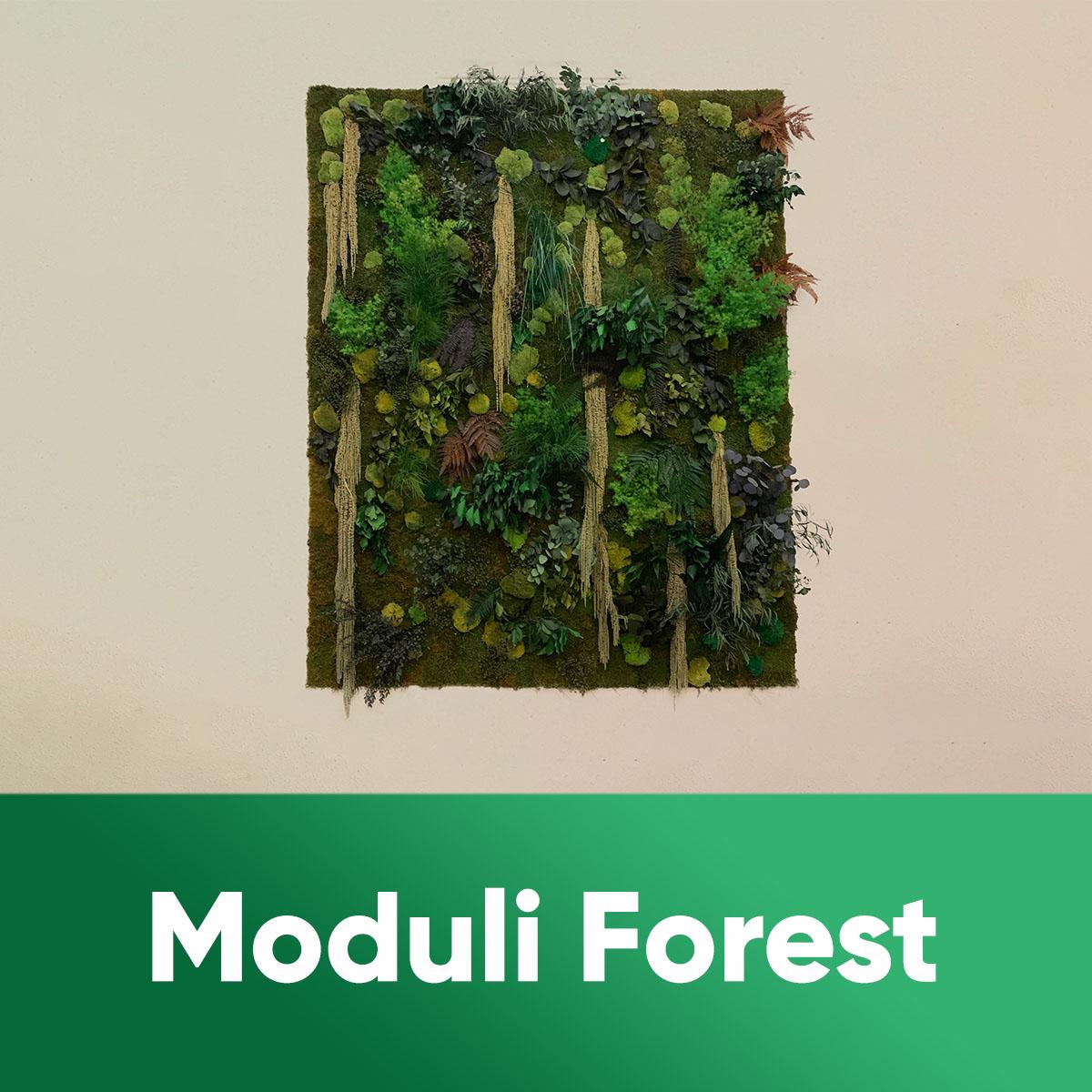 MODULI FOREST