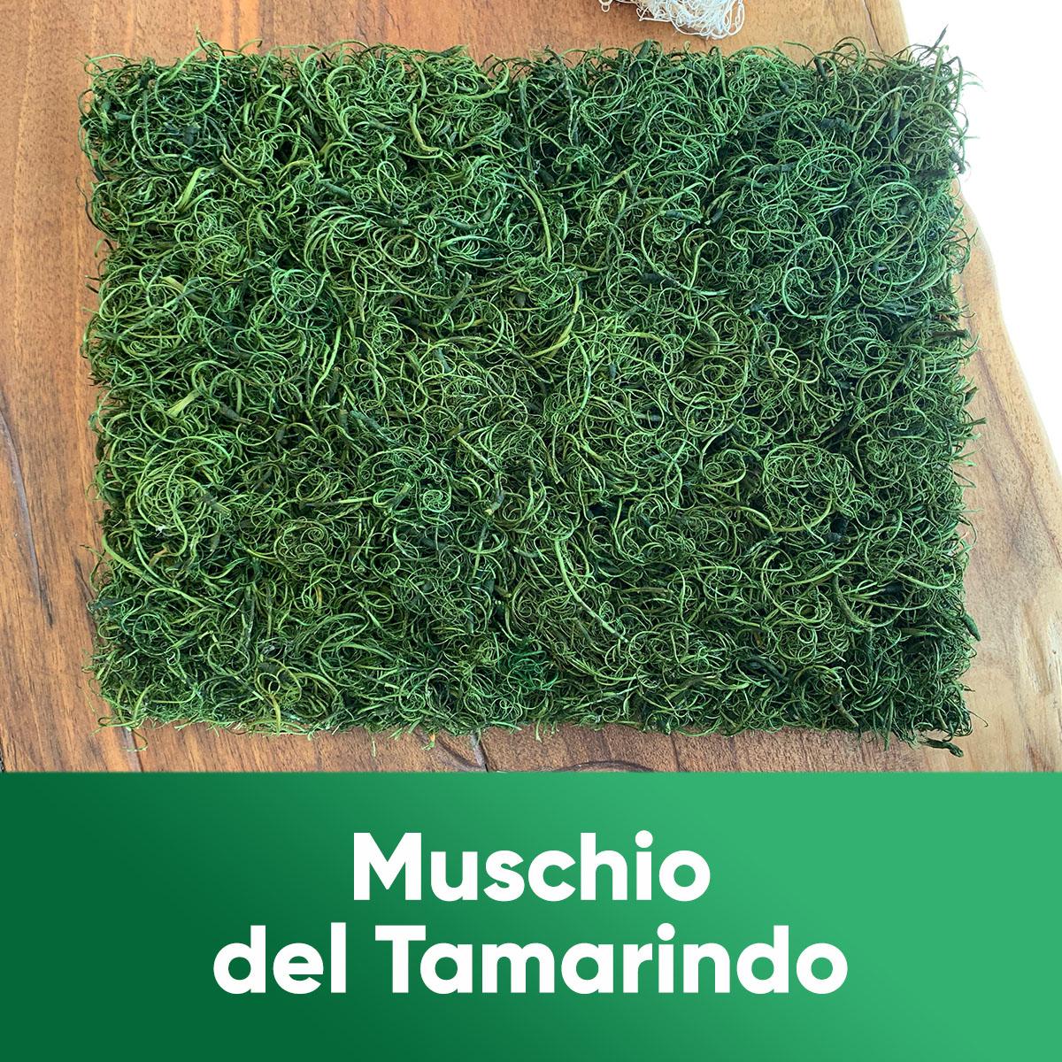 MUSCHIO DEL TAMARINDO