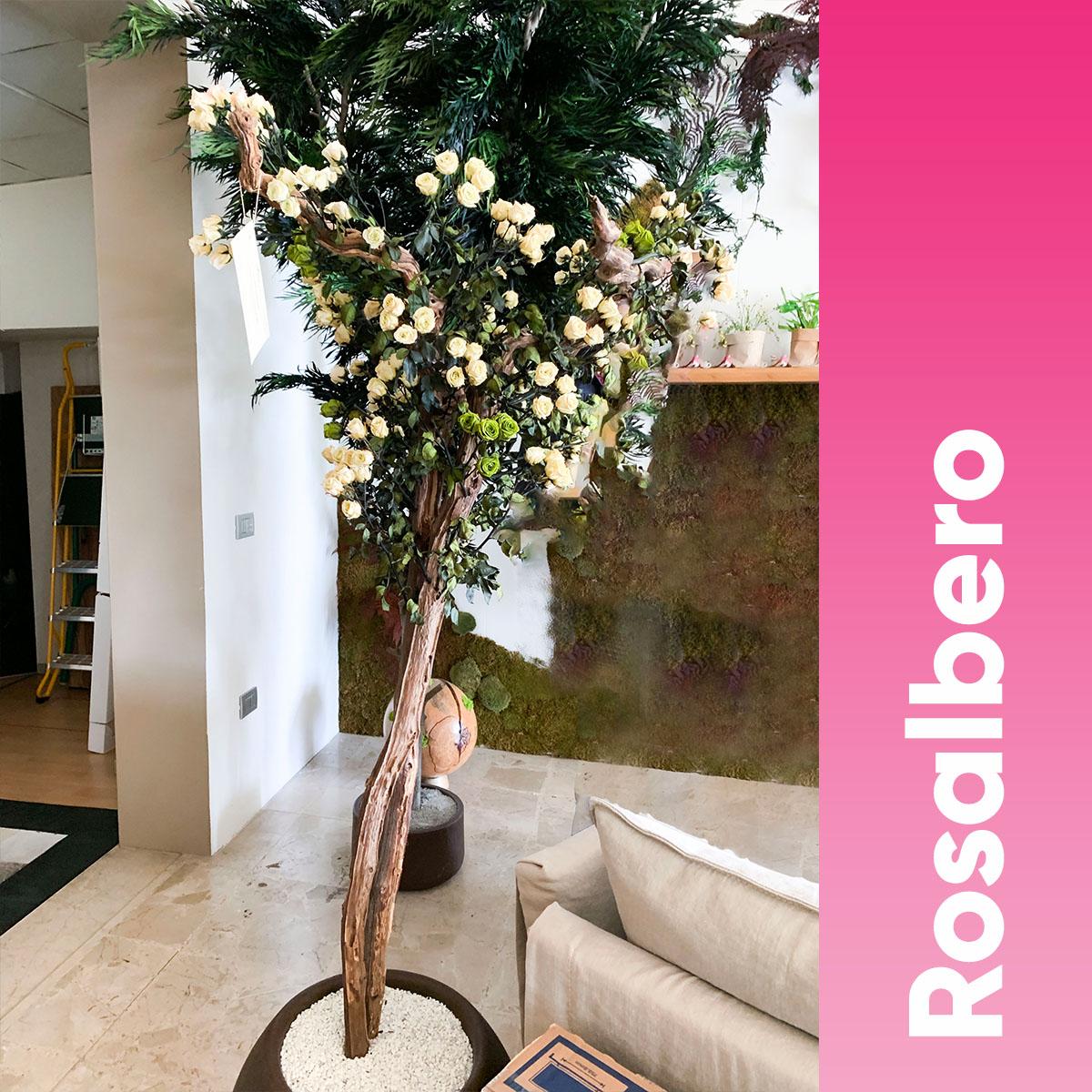 Rosalbero